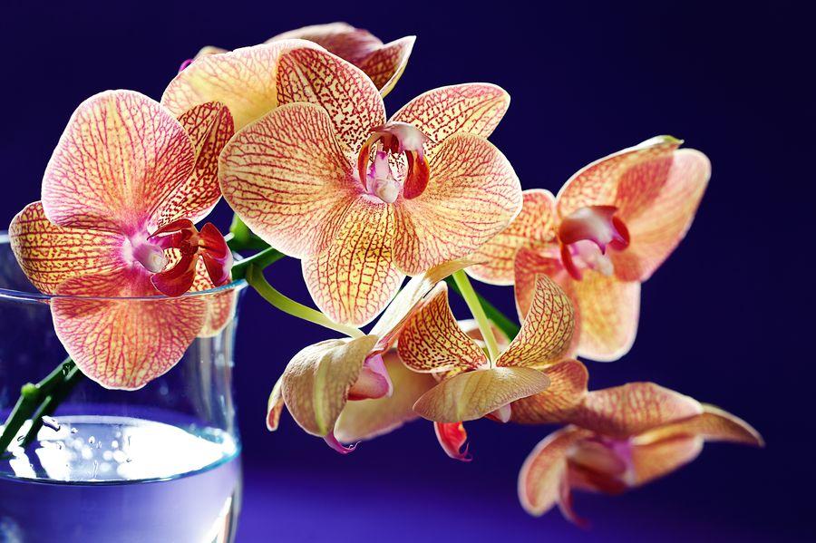 Цветы орхидеи не похожи друг на друга, каждый сорт поражает своим великолепием