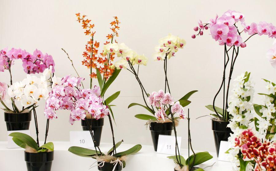 Орхидеи - лучшее цветочное украшение домашнего зелёного сада