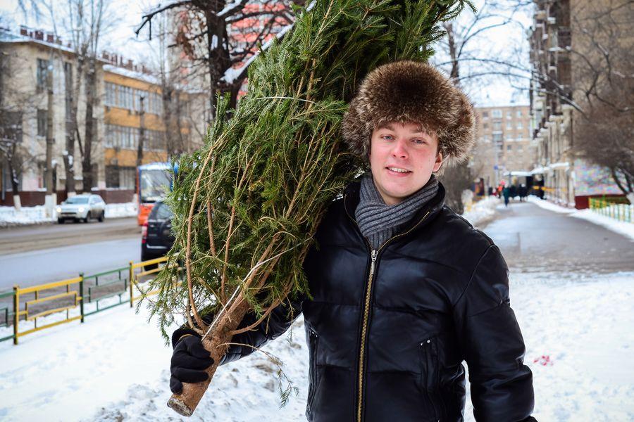 Выбор новогодней ёлки играет большую роль в её дальнейшем сохранении