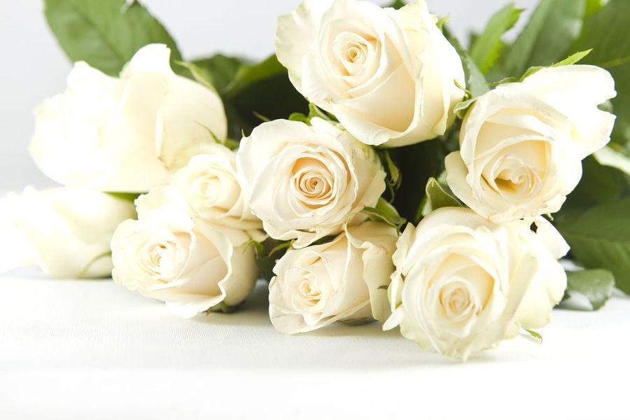 Роза Мондиаль (англ. Rose Mondial)