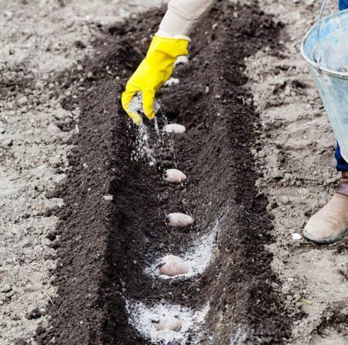 Зола, смешанная с компостом или торфом, обогатит почву калием