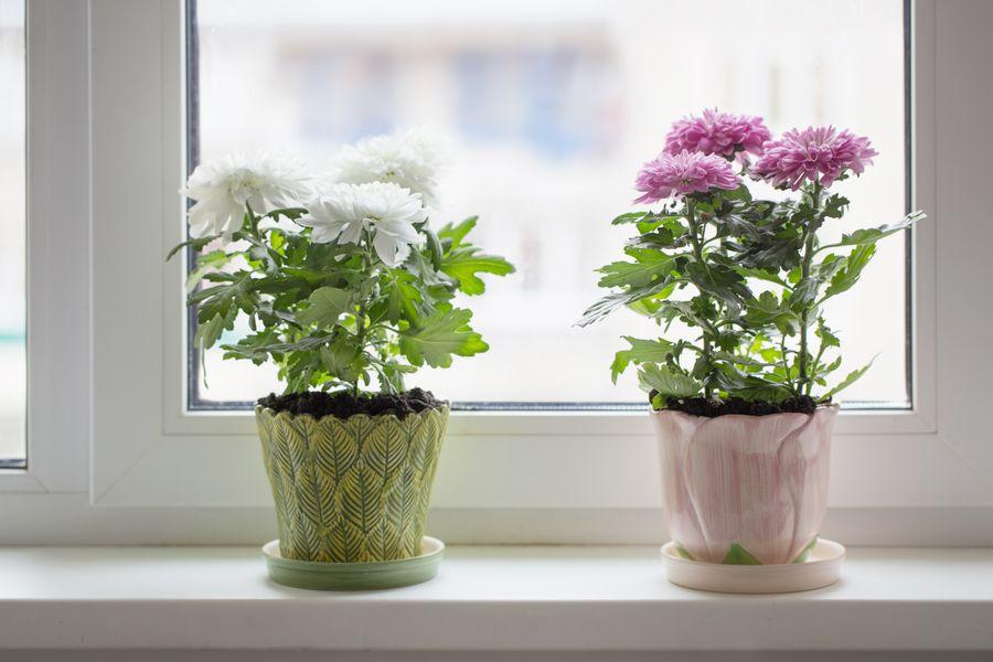 В пластмассовых горшках комнатным растениям зимой теплее