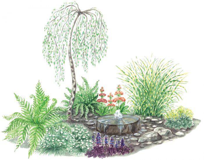 План-схема 1 посадки осоки в саду