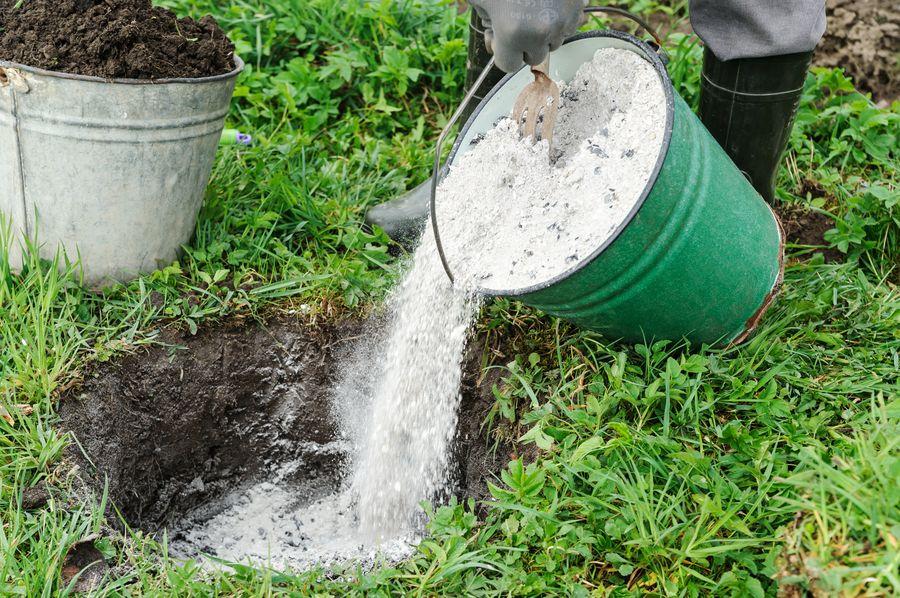 Зола улучшает структуру почвы, насыщает её микроэлементами, питает растения, защищает от вредителей