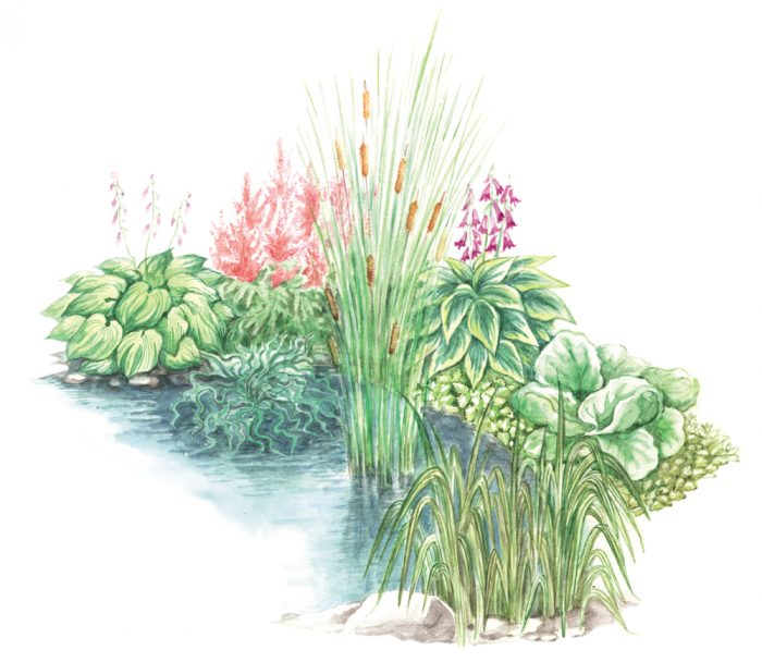 План-схема 2 посадки осоки в саду