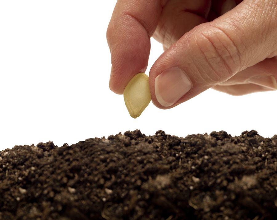 Выбор семян и почвы - важный момент в процессе выращивания рассады