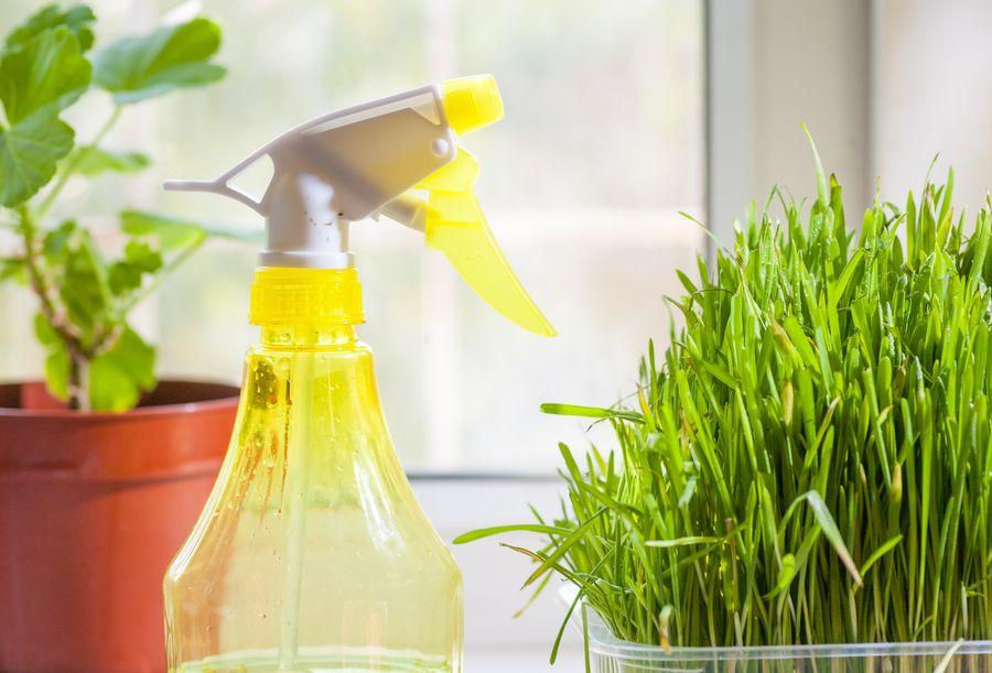 Увлажнять комнатные растения зимой нужно и с помощью опрыскивания