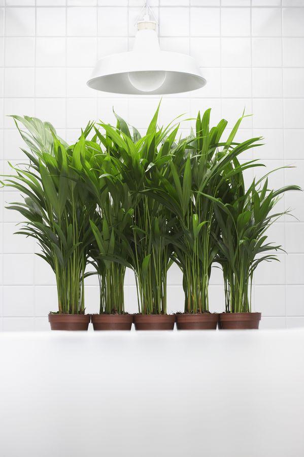 В пасмурные дни растениям недостаток дневного освещения компенсируют искусственным