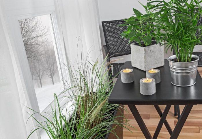 Правильный уход за комнатными растениями зимой поможет им встретить весну во всеоружии