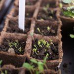 Лунный календарь садовода на февраль 2018 год поможет любителям ухаживать за растениями в нужные дни