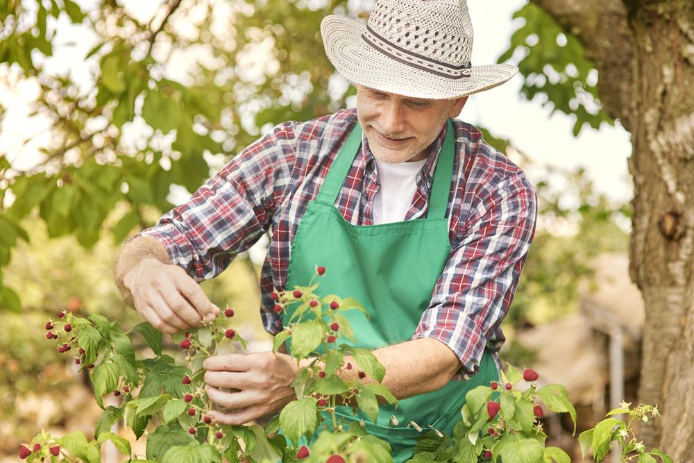От правильной подкормки будет зависеть и урожай