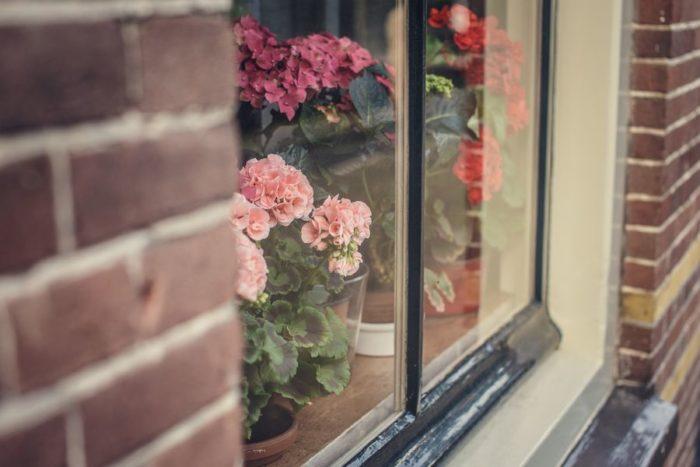 Уход за комнатными растениями зимой сводится к увлажнению, освещению и поддержанию комфорта