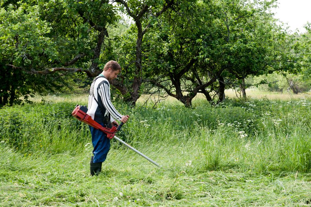 Если не планируете обрабатывать какую-то часть участка, посадите на ней газонную траву, чтобы свободное место не заняли такие сорняки, как марь