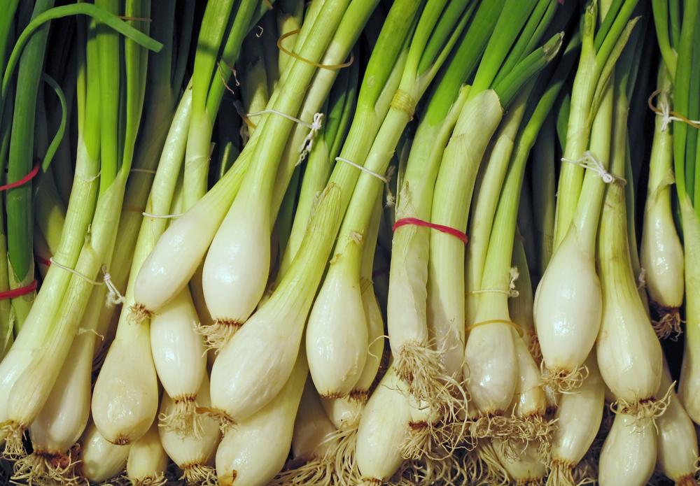 Если вы хотите вырастить крупные луковицы, сажайте не семена, а севок