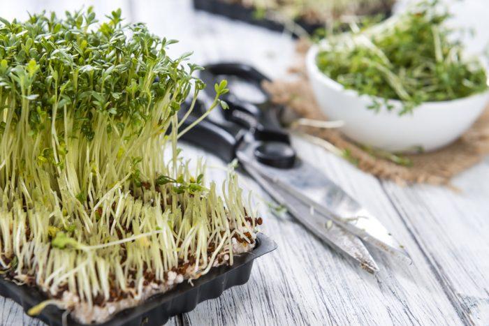 Вырастить на подоконнике кресс-салат, это значит, обеспечить себя на всю зиму свежей зеленью