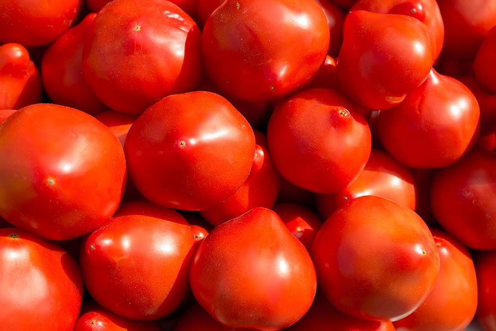 Сорта сибирских сортов томатов