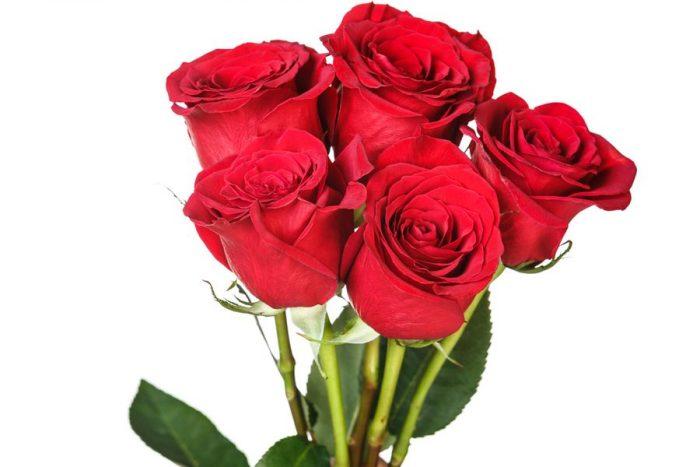 кенийская роза