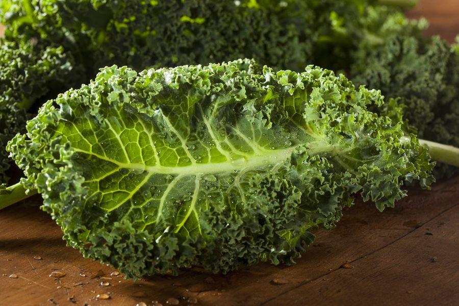Капуста Кале выращивание из семян полезные свойства