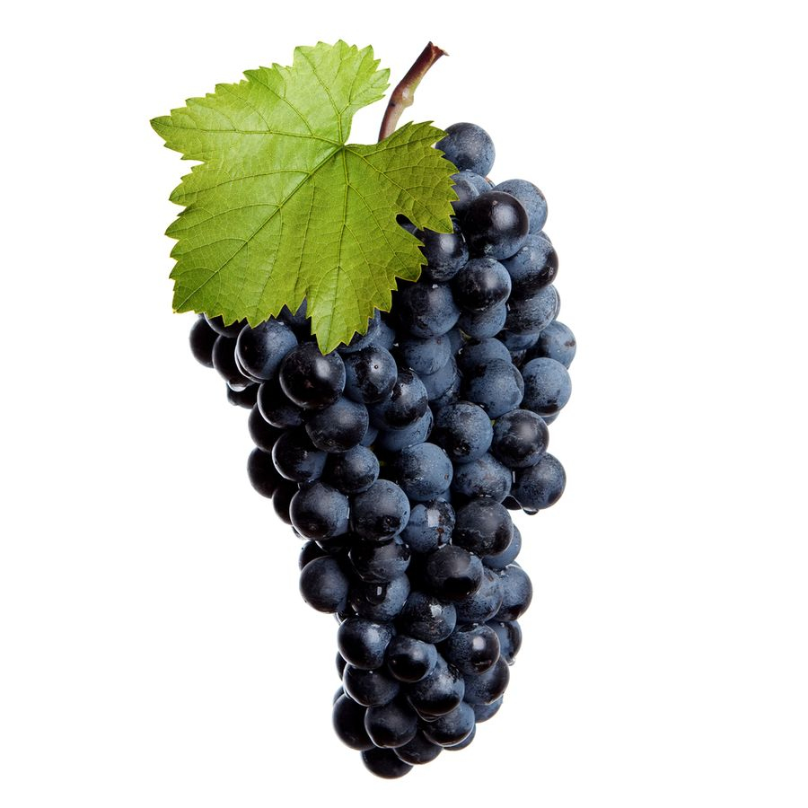 Виноград ранний магарача 372 первенец