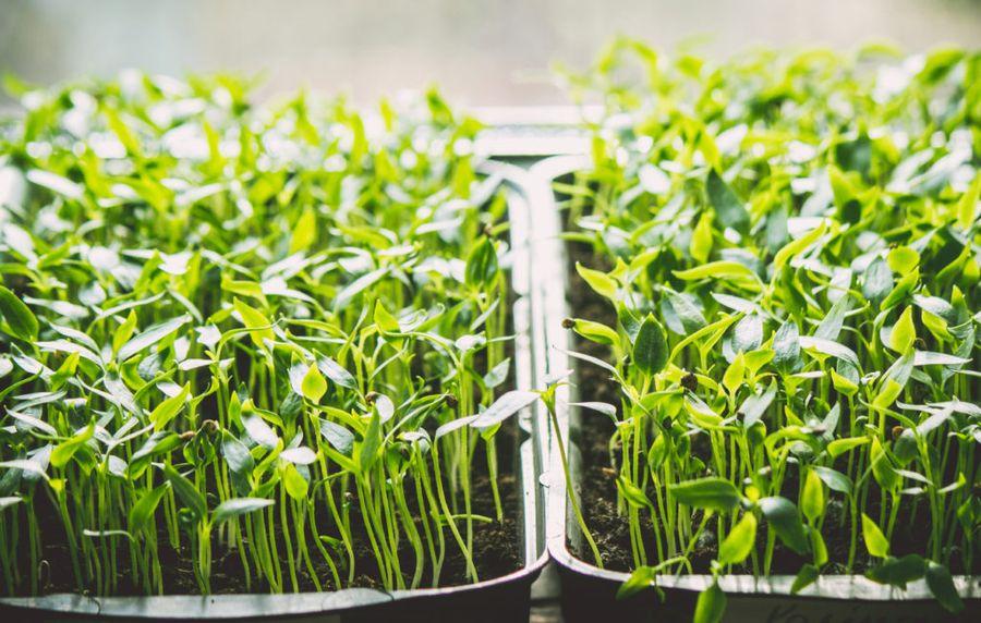Лунный календарь садовода на март 2018 года подскажет, когда лучше посадить рассаду, сделать обрезку деревьев в саду и многое другое