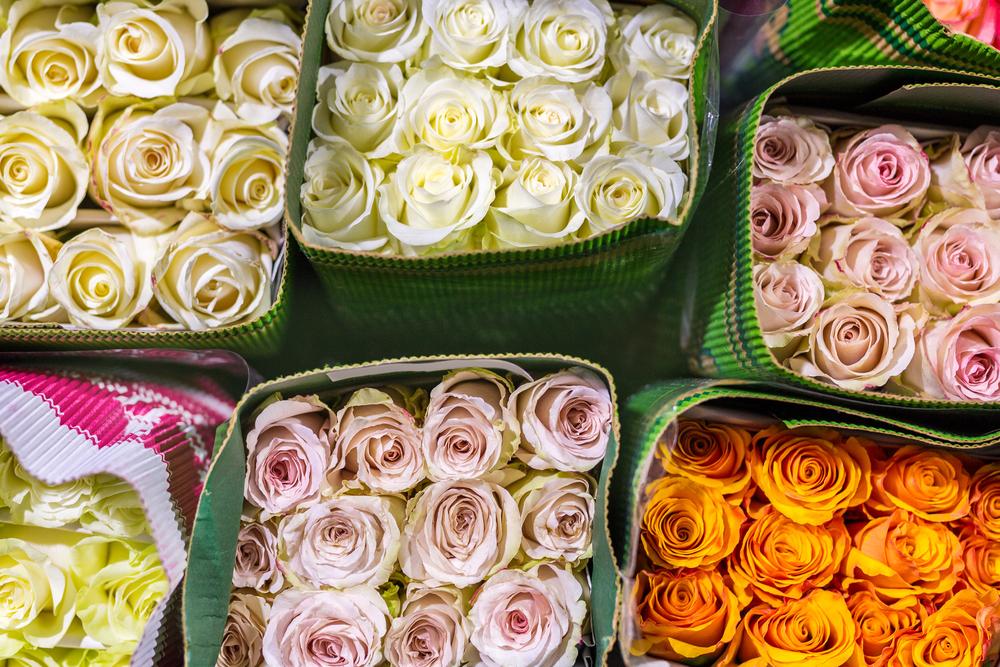 Красиво выглядят розы, которые сочетают в себе несколько оттенков