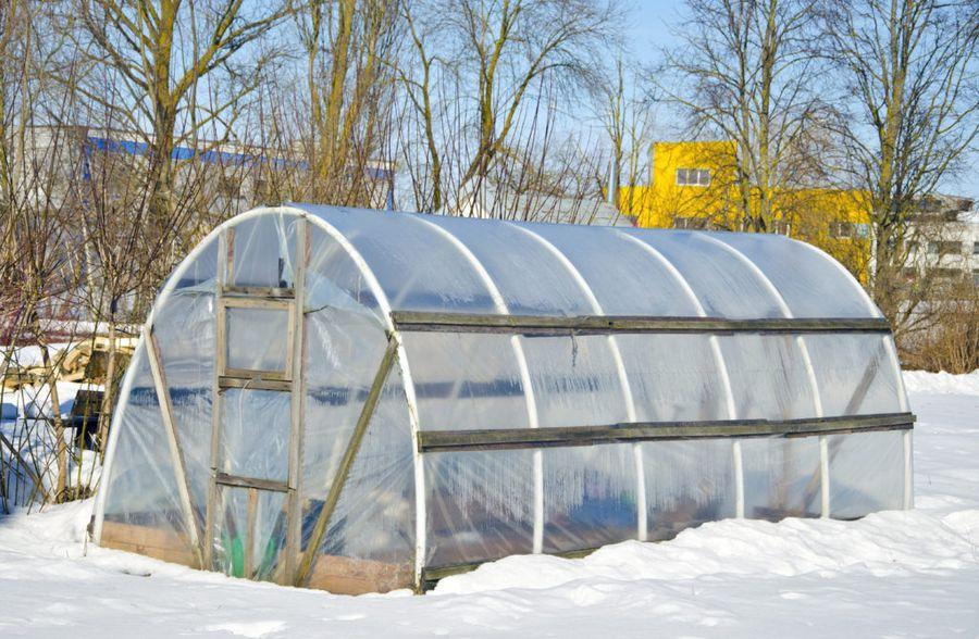 В марте можно начать высаживать в теплице первые огородные культуры
