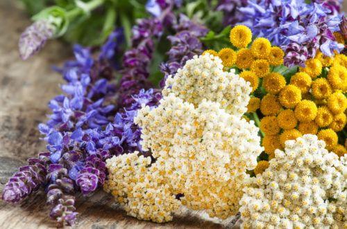 Растения могут помогать в борьбе с вредителями