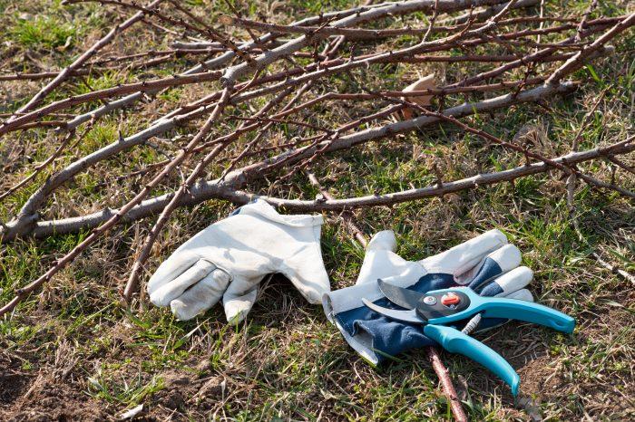 Срубленные ветви и другие остатки лучше сразу уничтожить, а не оставлять неубранными на участке