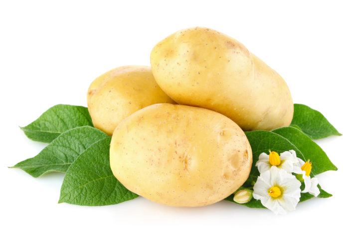 Луковая шелуха защитит клубни и само растение от фитофторы, картофельной нематоды и медведки, проволочника