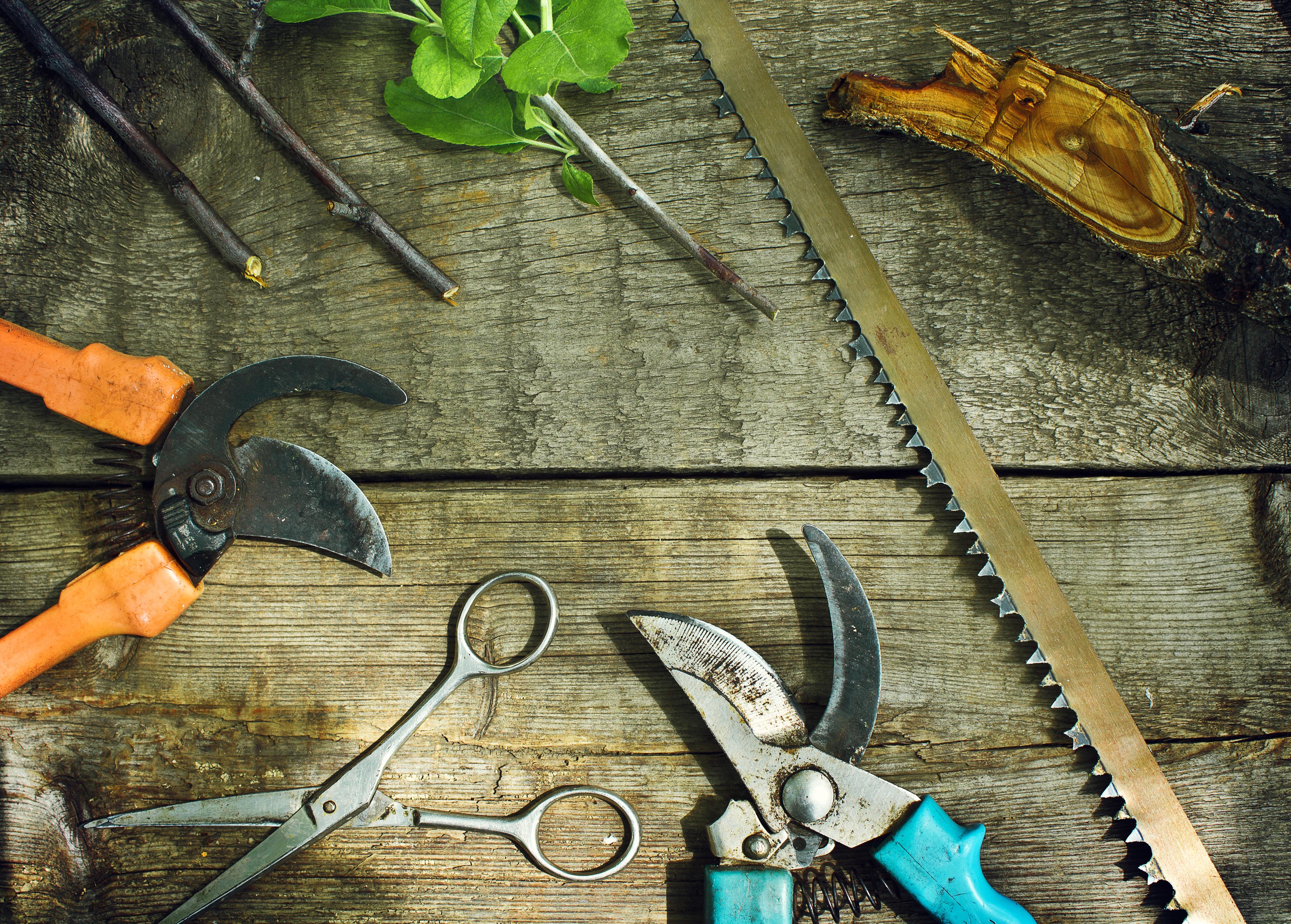 Садовые инструменты перед процессом необходимо проверить на наличие грязи, ржавчины и затупленных концов