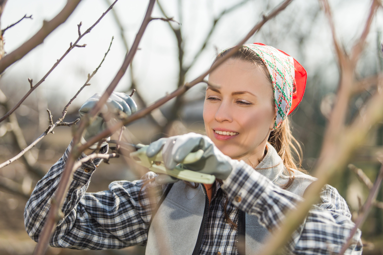 Обрезка деревьев происходит ранней весной до того, как начнётся сокодвижение