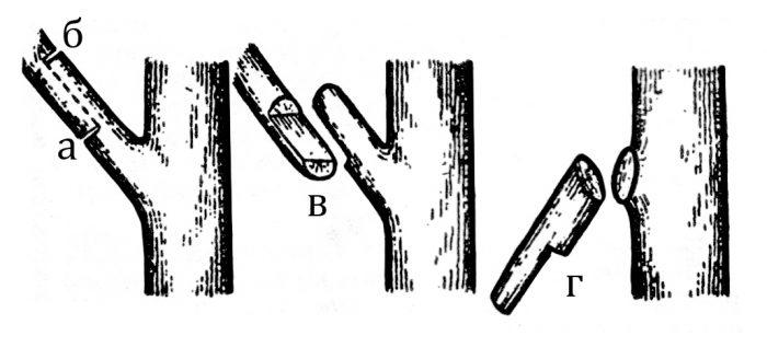 а - первый надпил сука внизу; б - надпил сука сверху; в - сук откалывается; г - удалить оставшуюся часть сука.