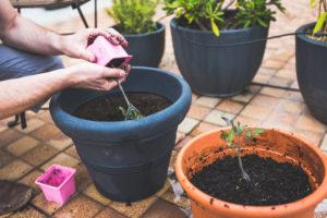 Выполнение 4-х простых правил позволит вам собирать обильный урожай