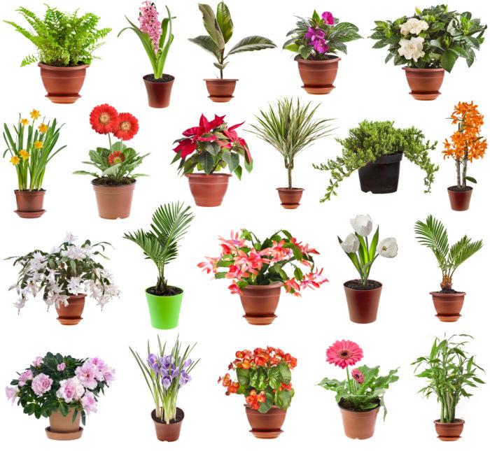 Комнатные растения в цветочной оранжереи это не только многообразие в доме, но и лекарь для тела и души
