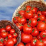 Правильный уход за рассадой способствует прекрасному урожаю