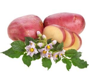 Картофель с розовой кожурой по вкусовым качествам не уступает традиционным сортам