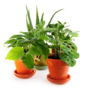 Комнатные растения несут в себе скрытый смысл
