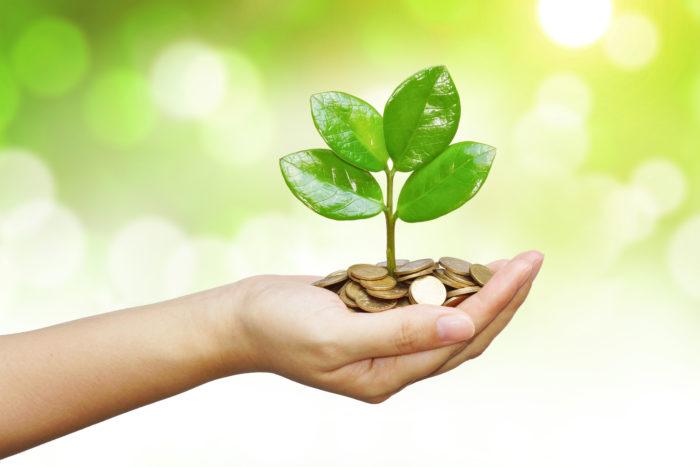 Комнатные растения способствуют росту достатка