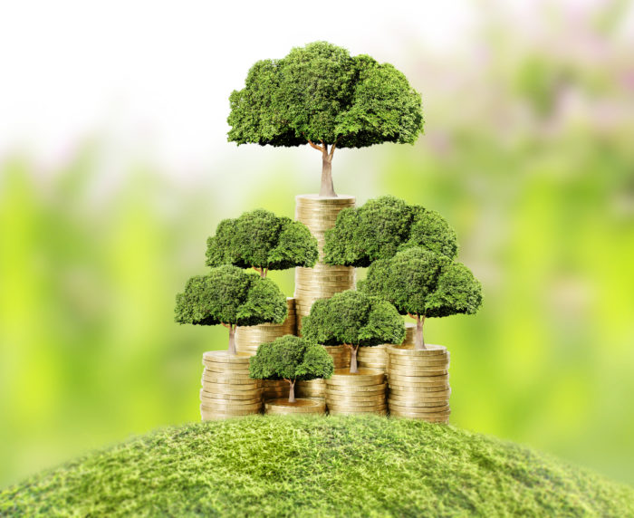 Комнатные растения способны улучшать денежную энергетику дома