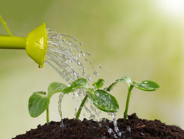 Между возрастом растения и частотой полива существует прямая связь