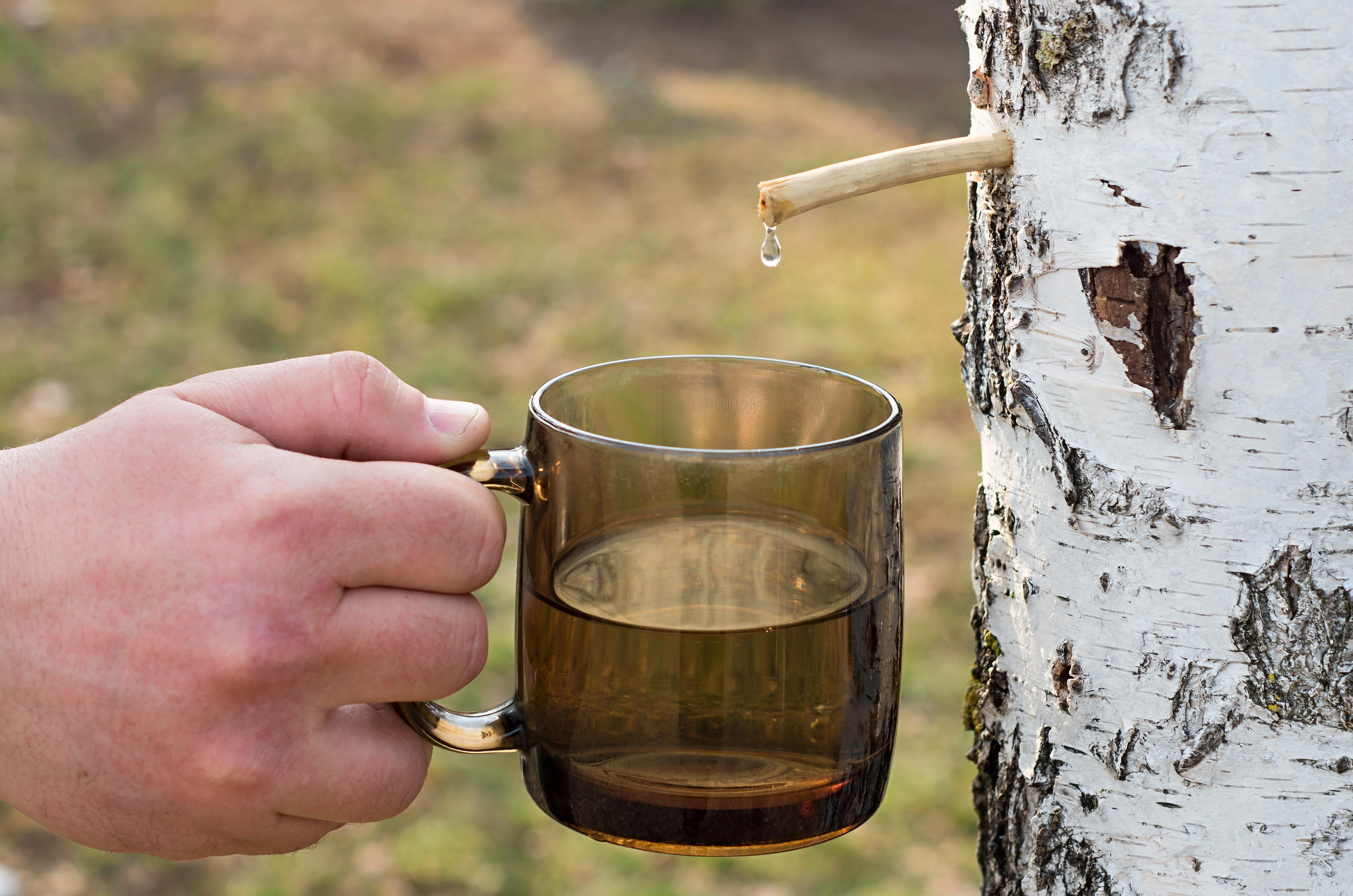 Берёзовый сок укрепляет иммунитет, выводит токсины, улучшает обмен веществ