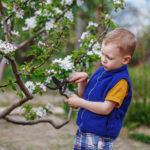 Май - последний месяц для санитарной и декоративной обрезки деревьев перед началом дачного сезона