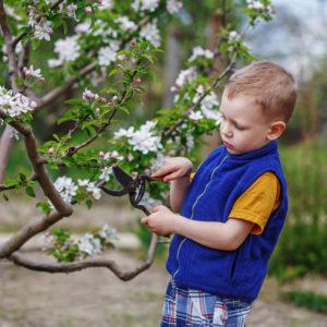 Лунный календарь садовода на май 2020 года