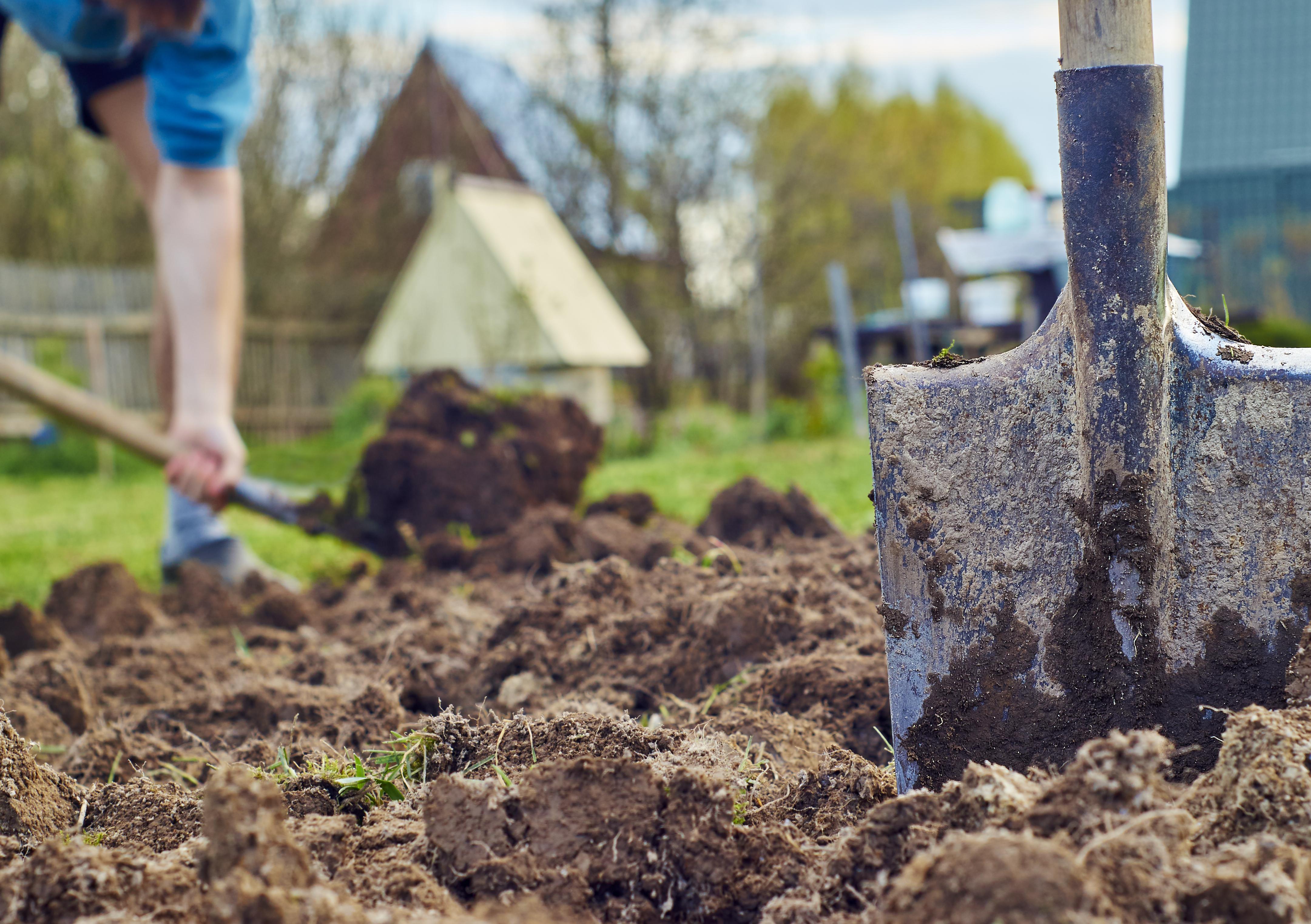 Лунный календарь садовода на май 2018 подскажет, когда начать основные работы в последний месяц весны