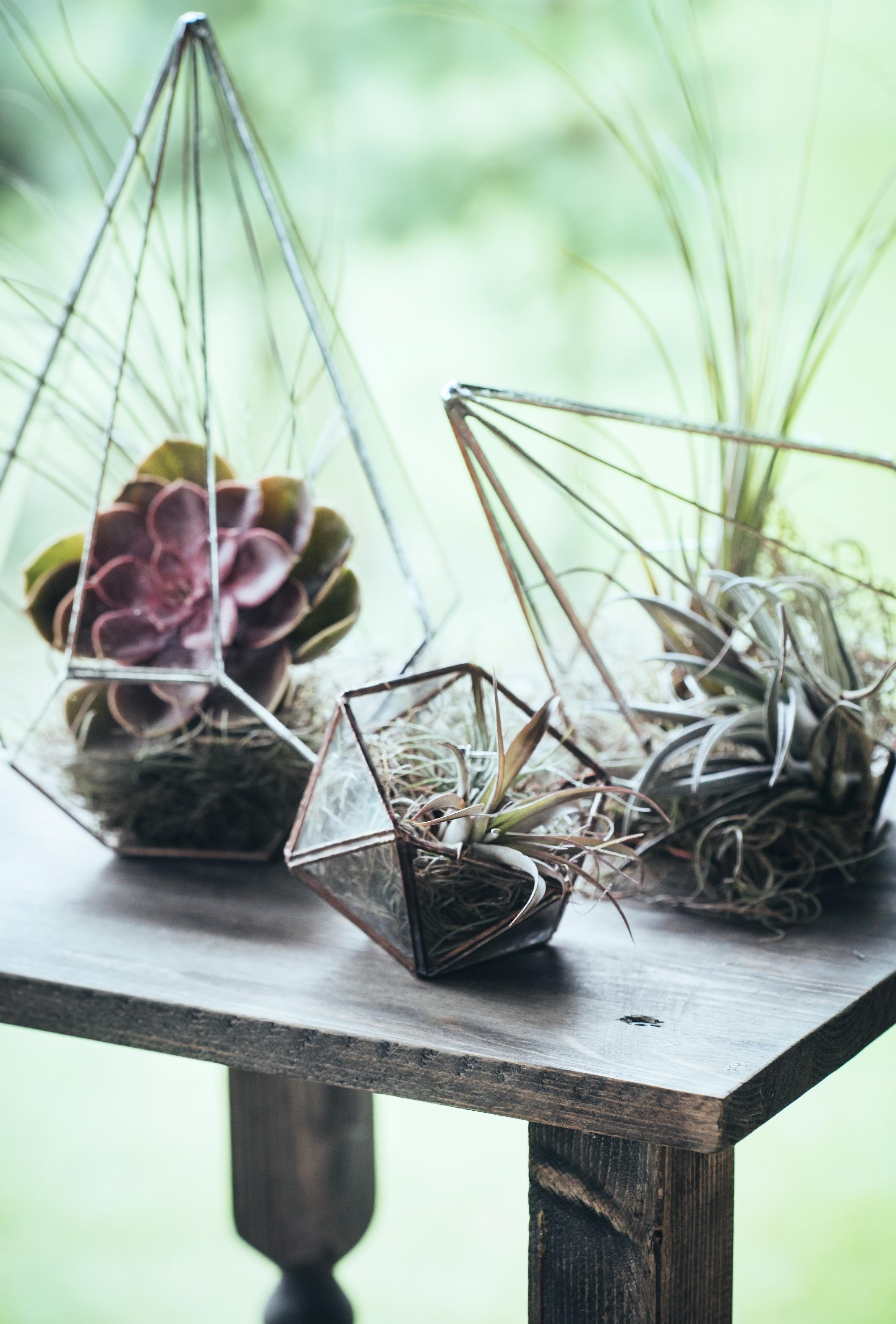 Для создания флорариума понадобится минимум инструментов и максимум идей