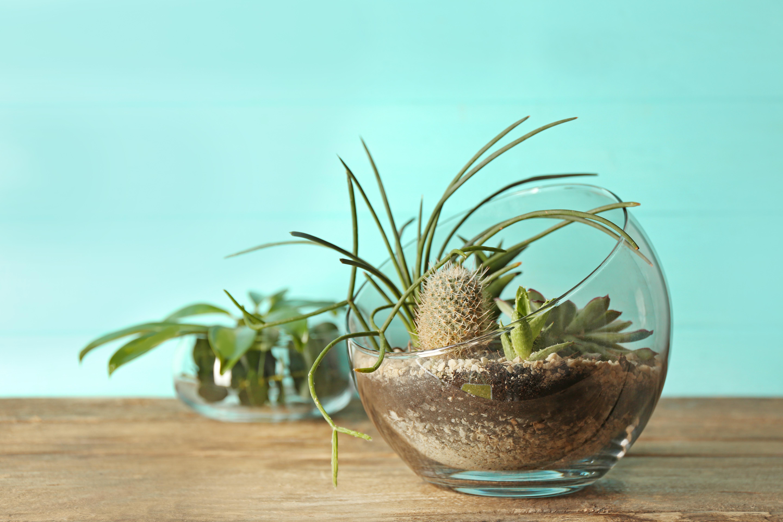Тропические и пустынные растения могут сосуществовать в одном сосуде, если каждое посадить в отдельный горшок и замаскировать