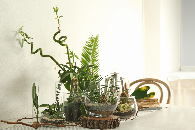 Флорариум - красивый элемент интерьера, который можно создать за короткое время
