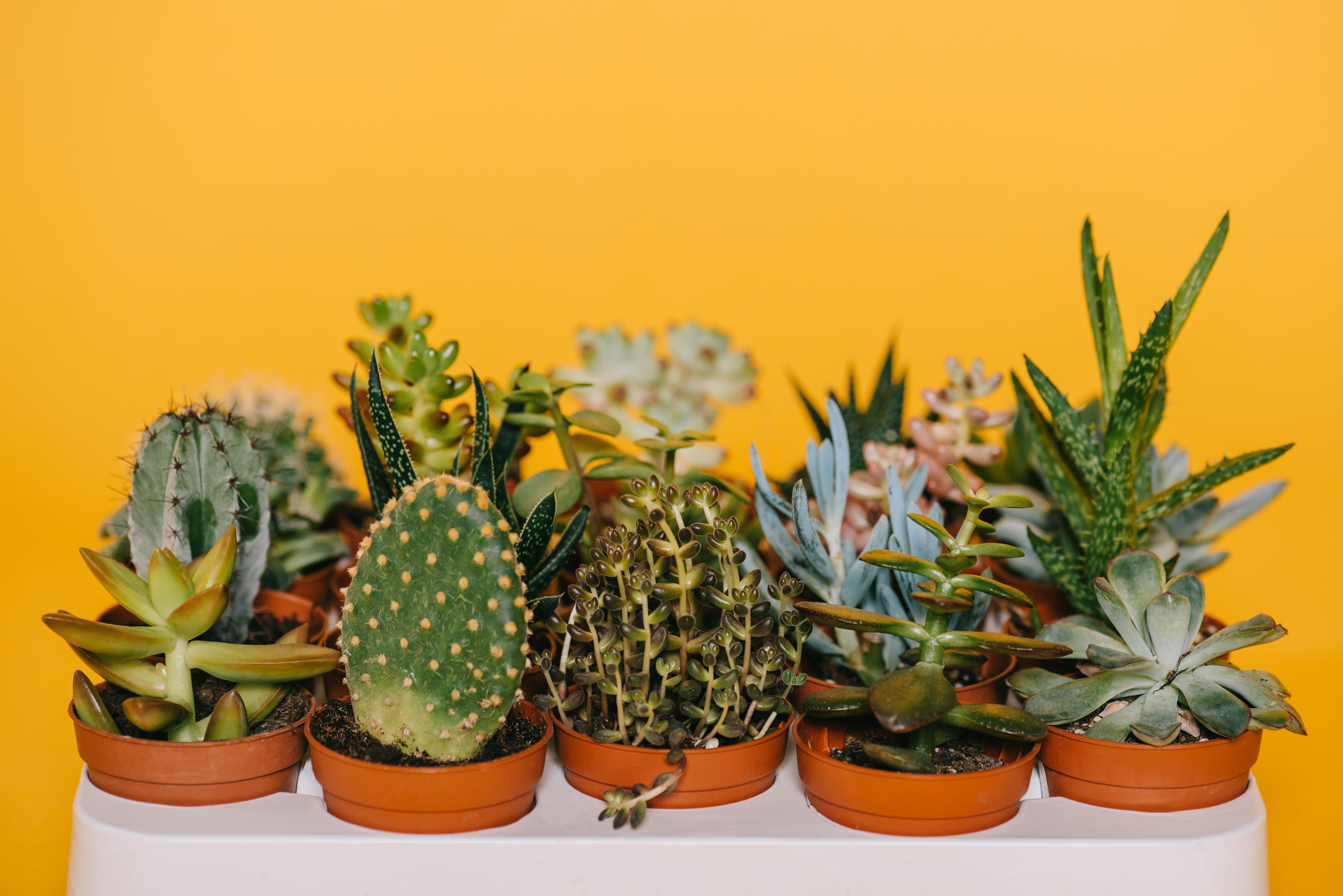 Кактусы разных форм и видов - наиболее подходящие растения для создания первых флорариумов
