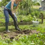 Что можно посадить после сбора урожая лука?
