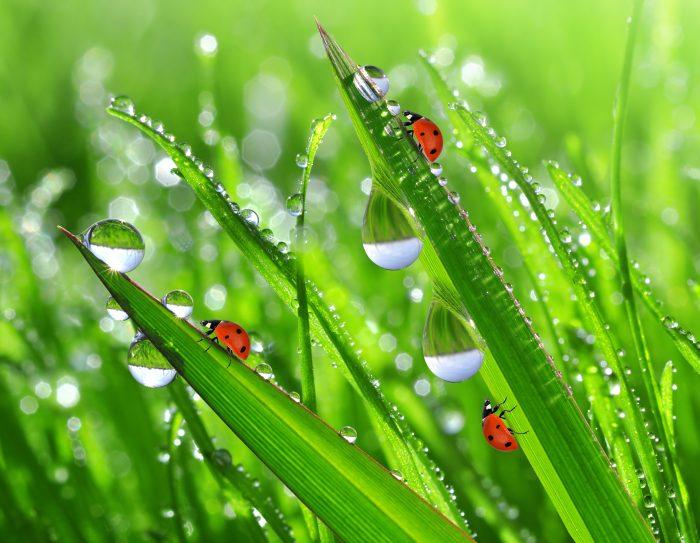 Июньская примета: тёплые ночи и обильная утренняя роса несут вести о хорошем урожае